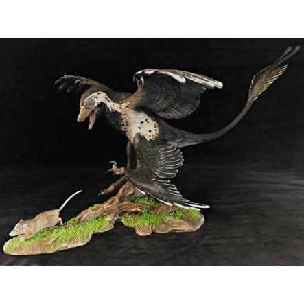 Microraptor jagt Eomaia, Diorama weißer Bauch