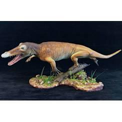 Ambulocetus natans, Modell