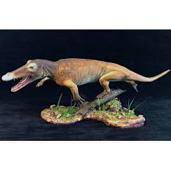 Ambulocetus, Walking Whale Model