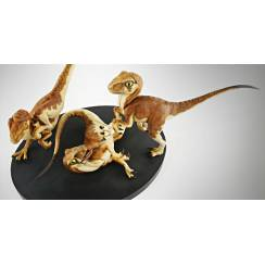 Velociraptor Jungtiere, von Chronicle Collectibles