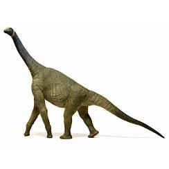 Atlasaurus, Dinosaurier-Figur von EoFauna