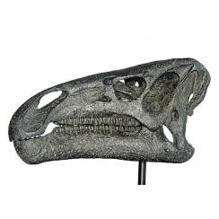 Iguanodon, Dinosaur Skull Replica by Favorite Co. Ltd.