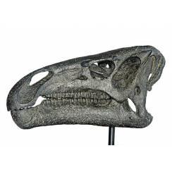 Iguanodon Schädel, Dinosaurier