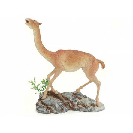 Aepycamelus, prehistoric Camel