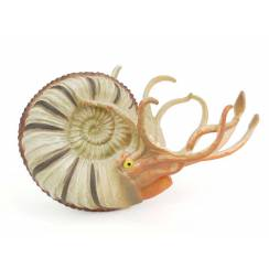 Pleuroceras, Ammonite Toy Figure by CollectA
