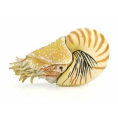 Nautilus, Perlboot Figur von CollectA