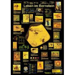 Leben im Bernstein, Poster von Planet Poster Edition