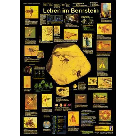 Leben im Bernstein, Poster