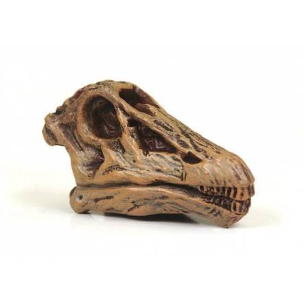 Diplodocus Skull, Dinosaur Miniature Figure by Safari Ltd.