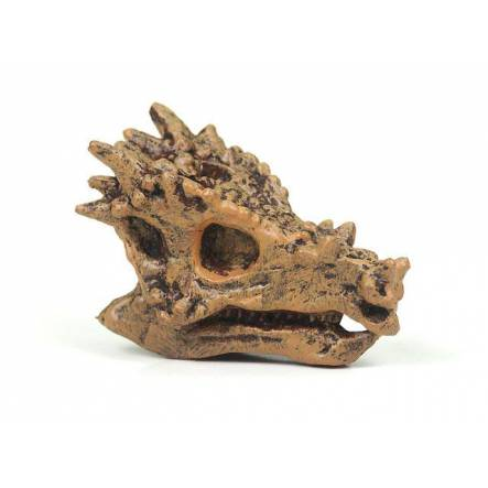 Dracorex Skull, Dinosaur Miniature Figure by Safari Ltd.