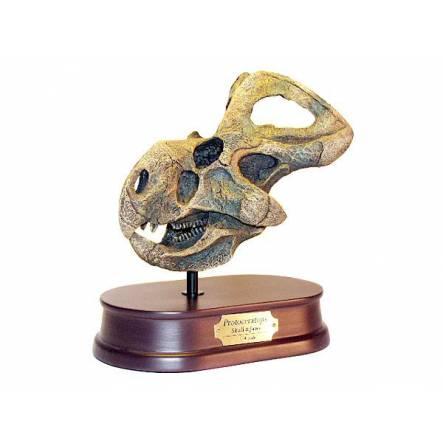 Protoceratops, Dinosaur Skull Replica by Favorite Co. Ltd.