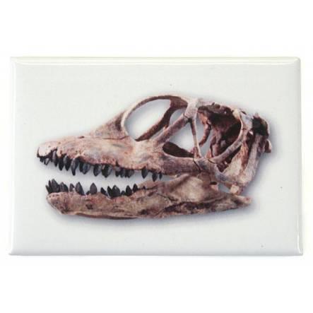 Spinophorosaurus, Dinosaur Skull Magnet
