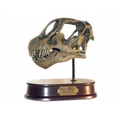 Camarasaurus, Dinosaurier Schädel Replika von Favorite Co. Ltd.