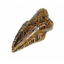 Thescelosaurus-Klaue, Fossilien Kopie