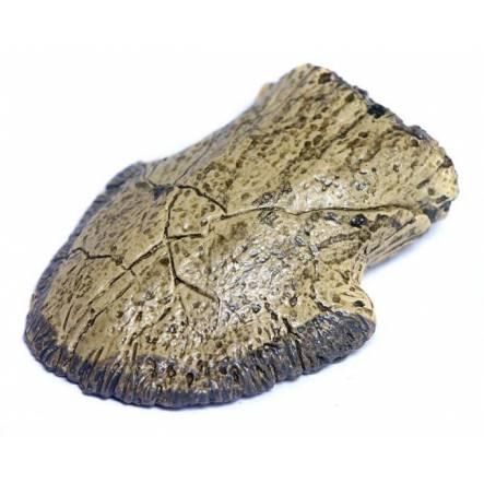 Edmontosaurus Ungual phalanx, Fossilien Kopie
