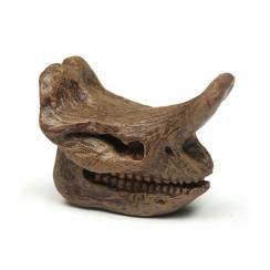 Embolotherium Skull, Brontothere Figure by Safari Ltd.