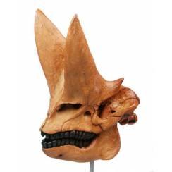 Arsinoitherium Schädel