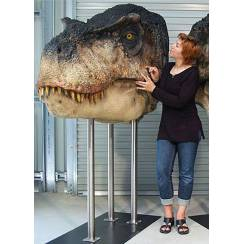 T. rex head II, lifesize Dinosaur Model by Studio Oxmox