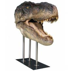 T. rex head I, lifesize Dinosaur Model by Studio Oxmox