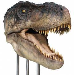 T. rex head I, lifesize