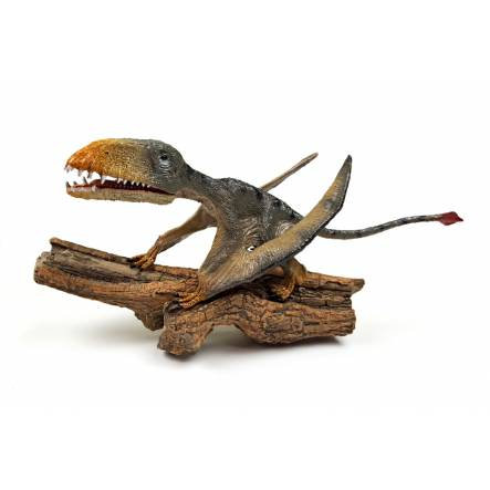 Dimorphodon 'Punch' sitting, Pterosaur Model by Rebor