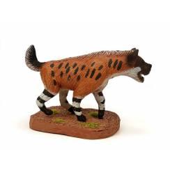 Pachycrocuta, Hyäne Modell