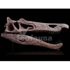 Baryonyx walkeri, Dinosaurier Schädel