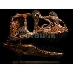 Ceratosaurus magnicornis, Dinosaur Skull