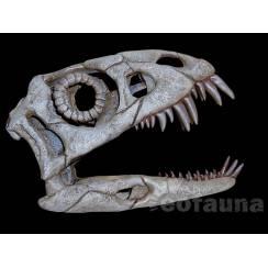 Daemonosaurus chauliodus, Dinosaur Skull