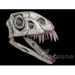 Daemonosaurus chauliodus, Dinosaurier Schädel