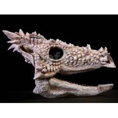 Dilophosaurus wetherilli, Dinosaurier Schädel