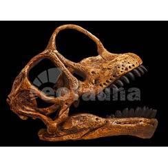 Europasaurus holgeri, Dinosaur Skull Replica by EoFauna