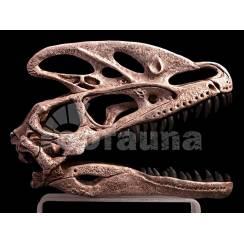 Guanlong wucaii, Dinosaur Skull Replica by EoFauna