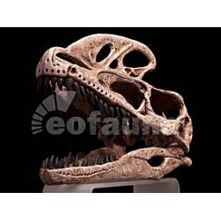 Guanlong wucaii, Dinosaur Skull
