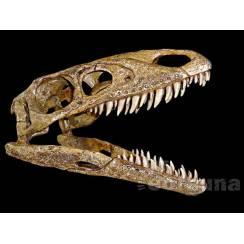 Sinocalliopteryx gigas, Dinosaur Skull Replica by EoFauna