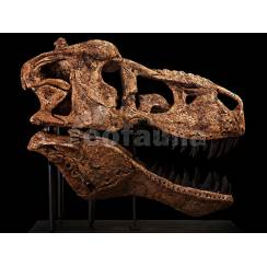 Tyrannosaurus rex, Dinosaur Skull Replica by EoFauna