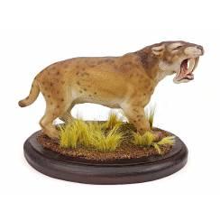 Barbourofelis, Sabre-toothed Cat