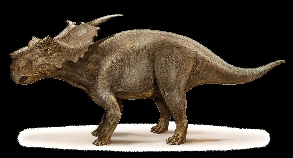 Wissenswertes über Achelousaurus