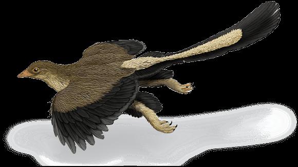 Wissenswertes über Archaeopteryx